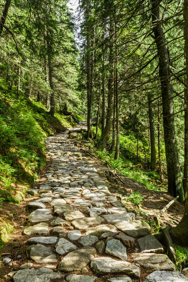 Stone path between the trees in the mountains royalty free stock photos