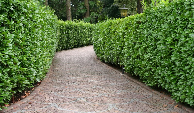 stone pathway between hedge royalty free stock image