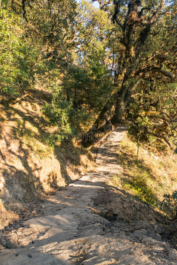 Stone paved Deoria Tal hiking trail through temperate forest in mountains of Himalayas in Uttrakhand. Garhwal Himalayas in Uttrakhand provides immense stock photo