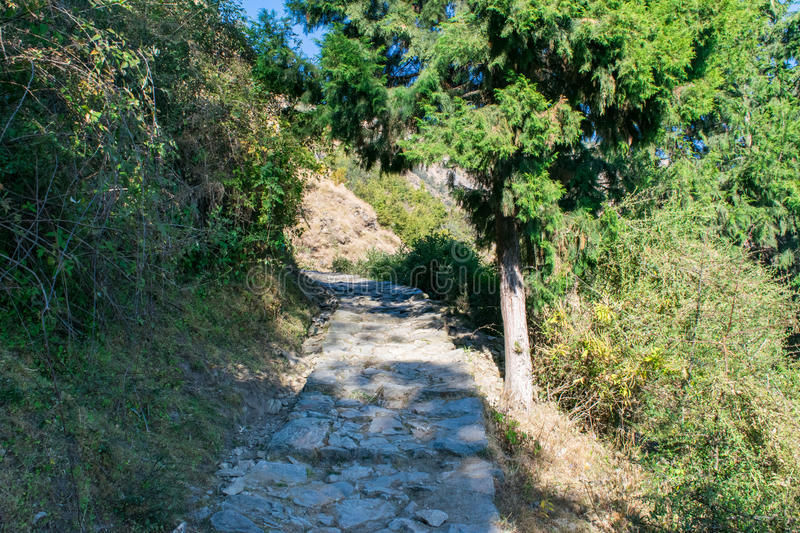 Stone paved hiking trail through coniferous forest in mountains of Himalayas in Uttrakhand. Garhwal Himalayas in Uttrakhand provides immense opportunity of stock photos
