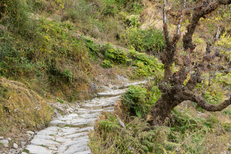 Stone paved hiking trail through temperate forest in mountains of Himalayas in Uttrakhand royalty free stock image