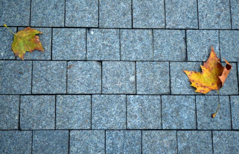 Stone pavement texture background stock image
