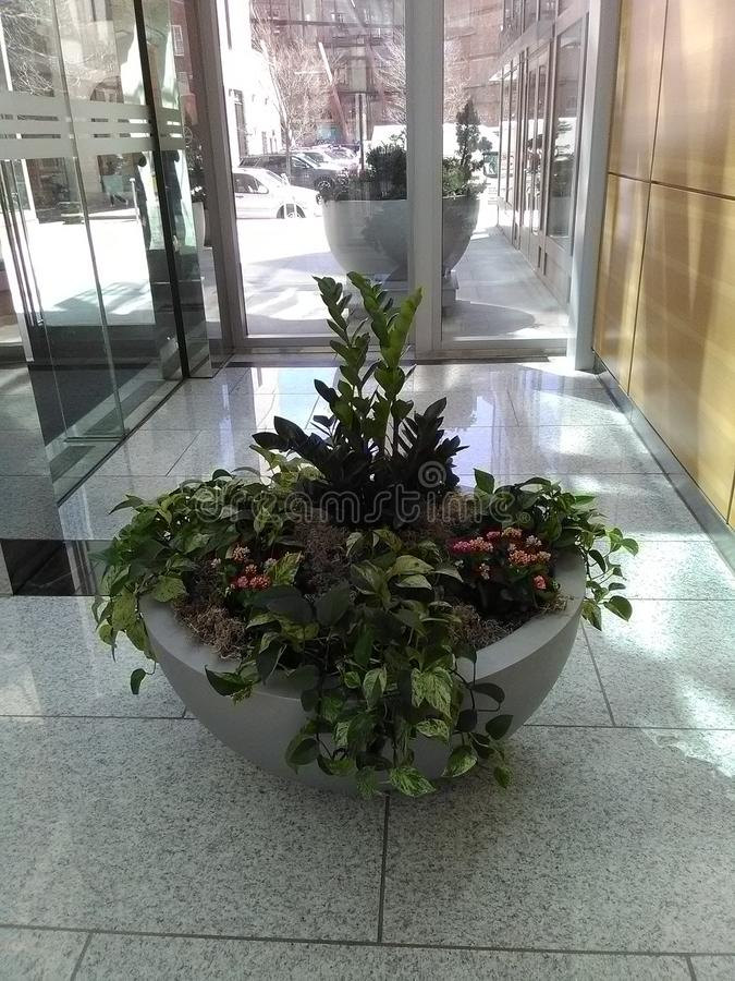 Stone pot with tropical plant in lobby in front of glass door. Stone pot with tropical plants in lobby in front of glass door on gray marble floor.  Plants stock photography