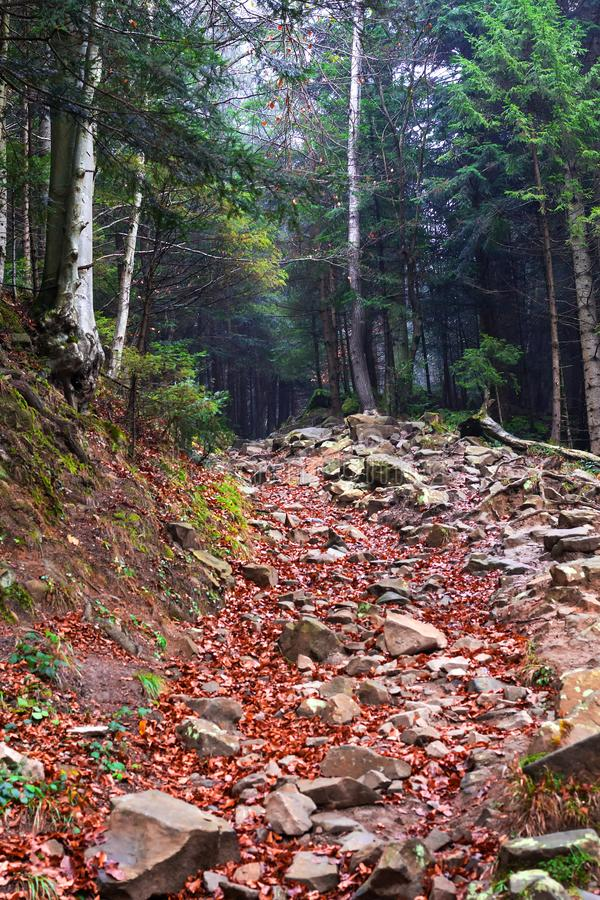 Stone road in the mountains between beautiful conifers. Mountain landscape. Natural background stock images