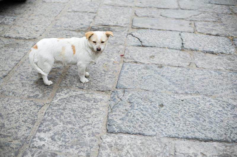 Stone dog on the road. Stone road puppy Chinese old stone roadn royalty free stock photo