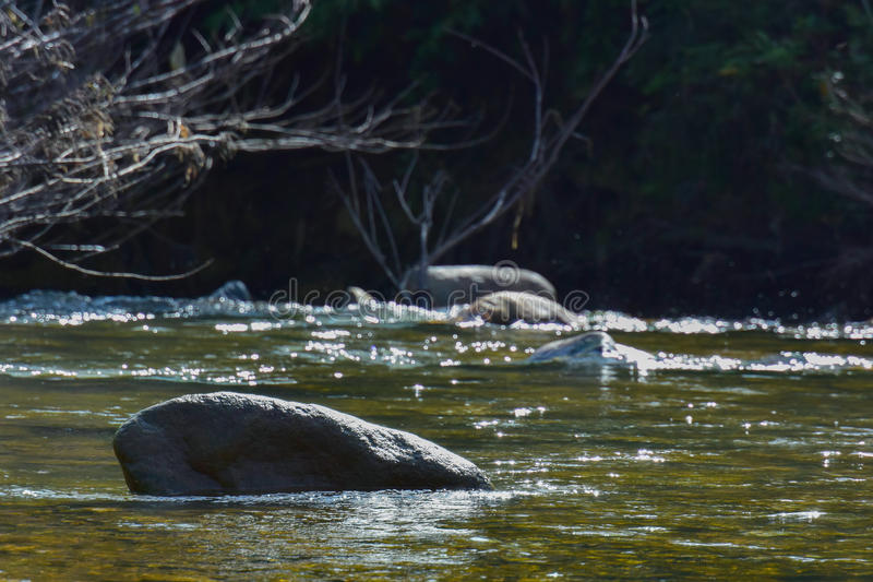 Stone Rock in the river stock photos