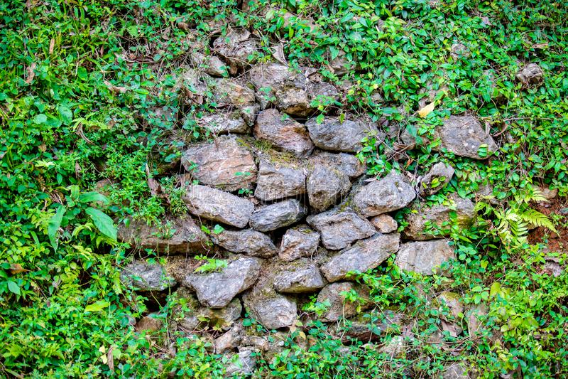 Stone or rock wall with small green plant tree around the border for background or backdrop. stock images