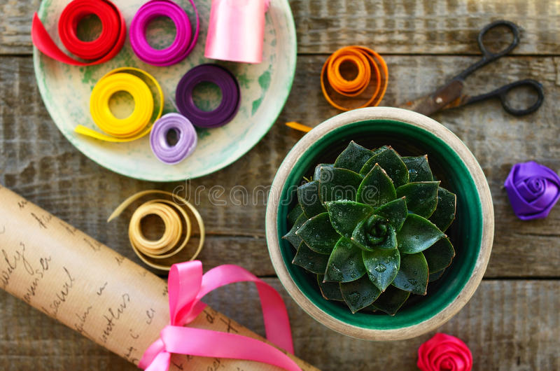 Stone rose cactus, wrap paper roll, set of ribbons and scissors. Table in flower shop - stone rose cactus, wrap paper roll, set of colorful ribbons, bow and royalty free stock photography