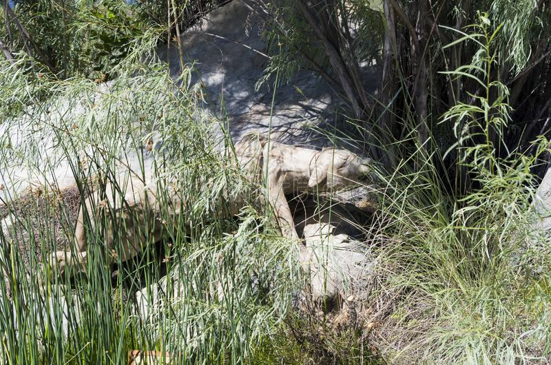 Stone sculpture of a hunting mountain lion stock photo