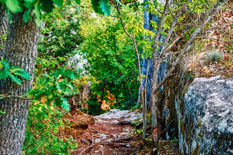Stone shady pathways in garden. Stones path through landscape with bordered by rock. Beautiful seasonal summer tropical woodland. stock images
