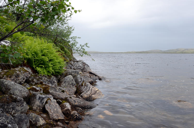 Stone shore in the Arctic tundra royalty free stock images