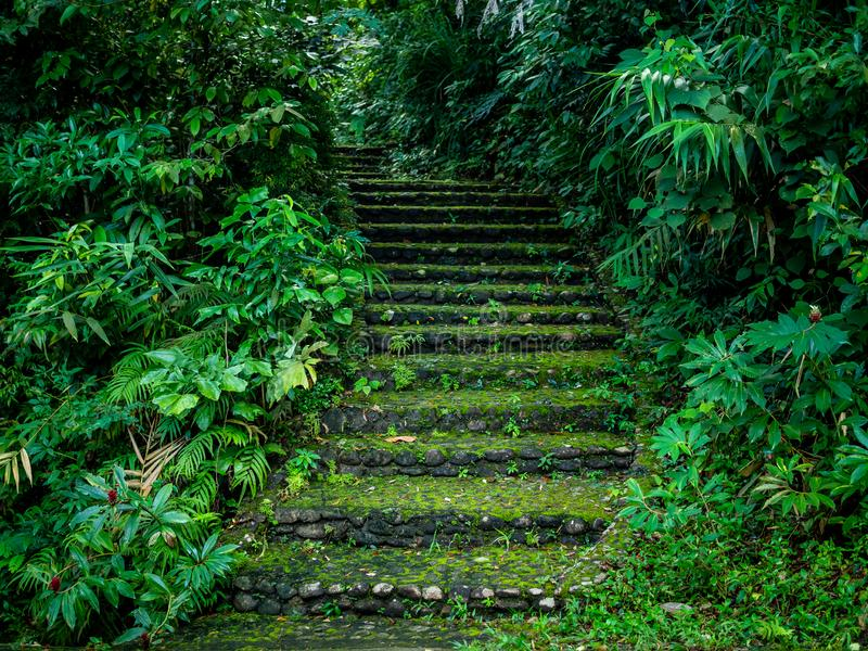 Stone staircase in the forest. Stone and gravel staircase cover by moss in the forest walkway leading up to the hill between tropical trees and plants royalty free stock photo