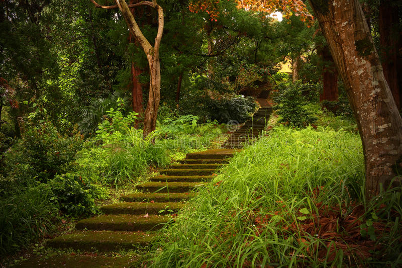 Stone staircase. Leading up a walkway through the forest royalty free stock photos