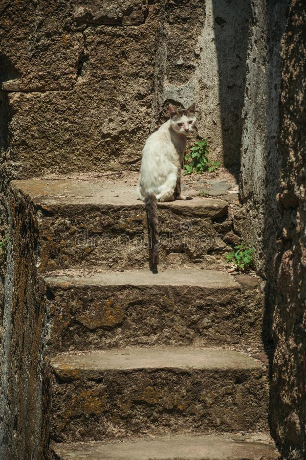 Stone staircase in a wall with a sitting cat. On a sunny day at Castelo de Vide. Nice little town with medieval castle to ensure the defense of the Portugal stock image