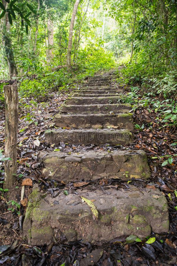 An stone staircase. This stone staircase in the wilderness deep in the country of Thailand royalty free stock images