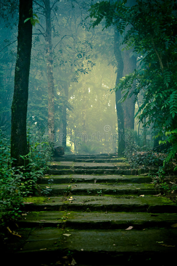 Stone stairs in the forest royalty free stock photography