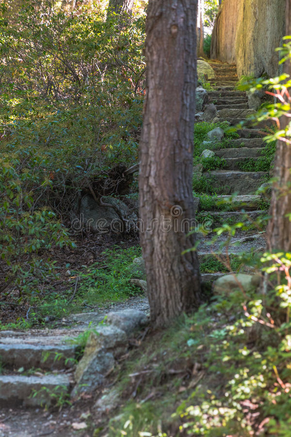 Stone Stairs in Forest royalty free stock photography