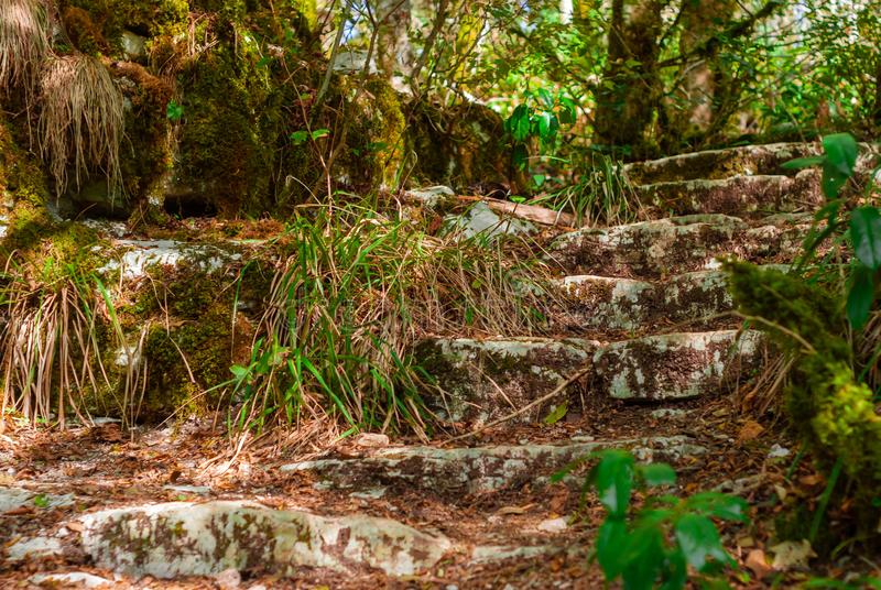 Ruins of an ancient staircase in the jungle royalty free stock image