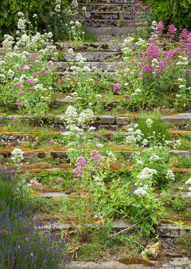 Download Stone steps ascending stock image. Image of step, flowers - 32064031