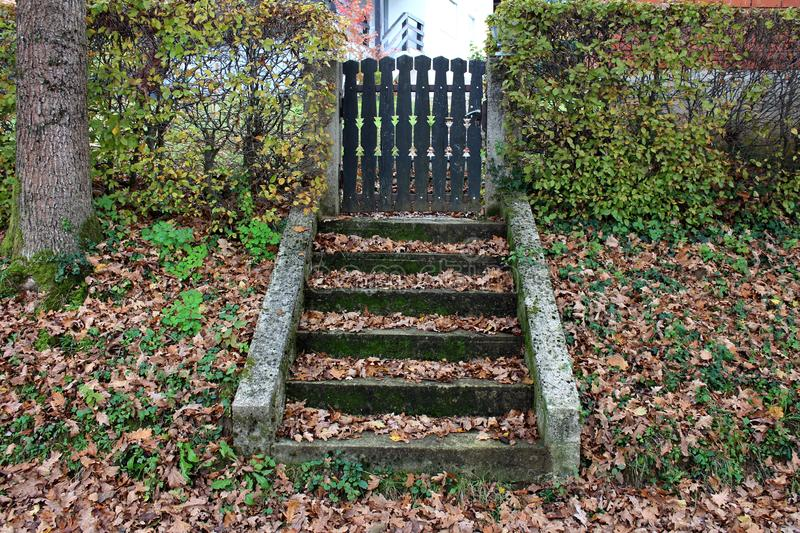Stone steps covered with moss and leaves leading towards wood picket yard fence doors royalty free stock image
