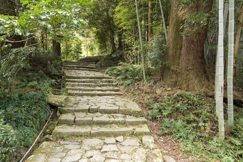 Stone steps and forest royalty free stock photos