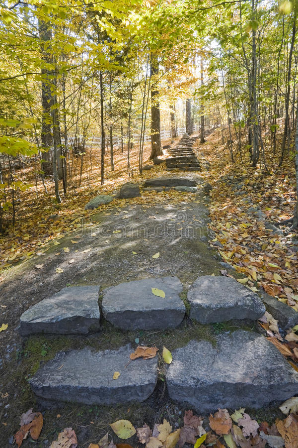 Stone Steps on Path in Forest