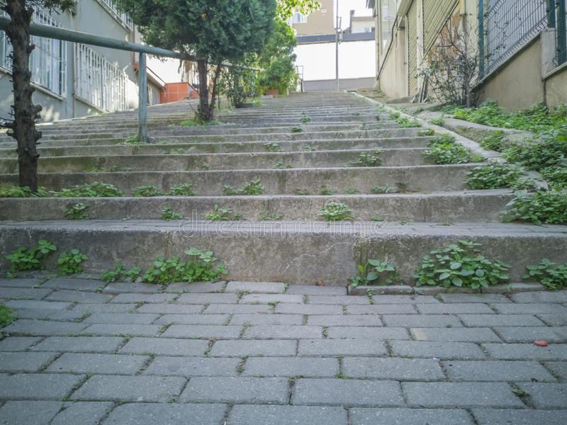 Stone steps with plants and trees at outdoor royalty free stock photos