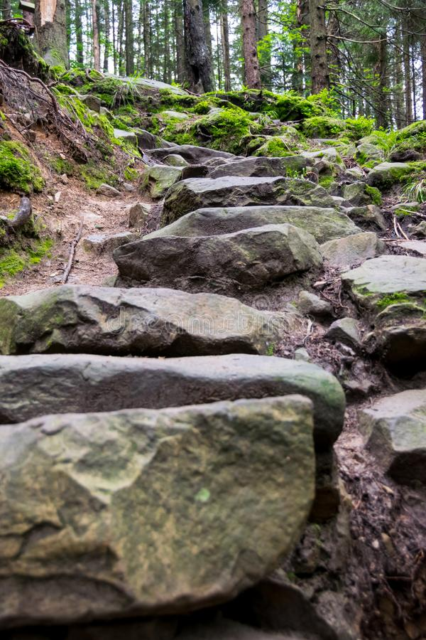 Stone steps on the trail in the woods stock image
