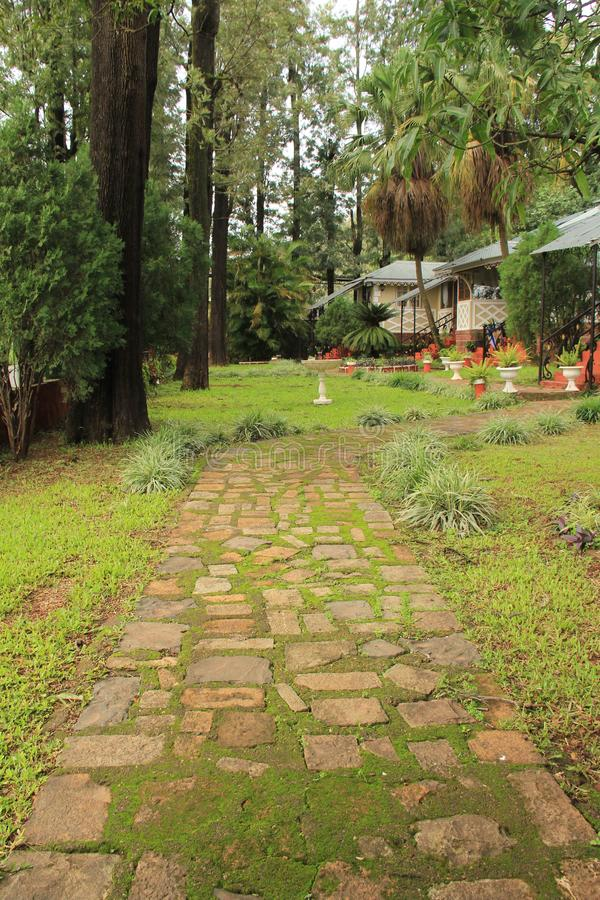 Stone tile lined path in garden stock images