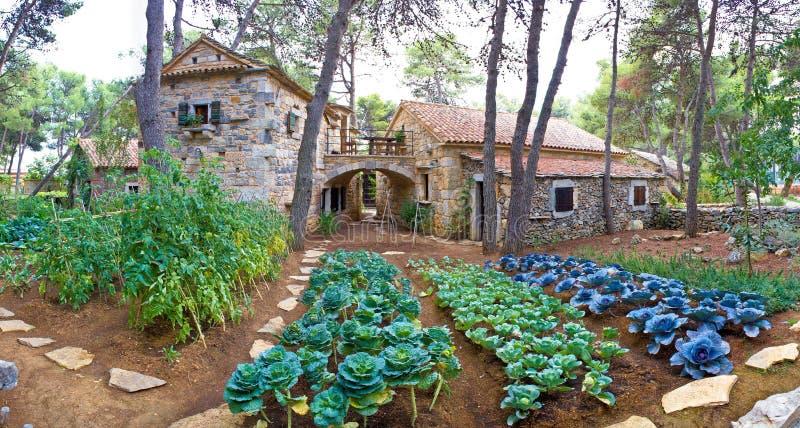 Stone village garden with vegetables. In Dalmatia, Croatia royalty free stock photos