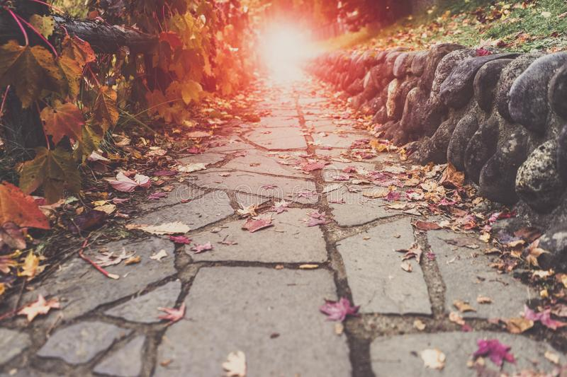 A Stone walking path, red leaves scattering on it. Leading into royalty free stock photography