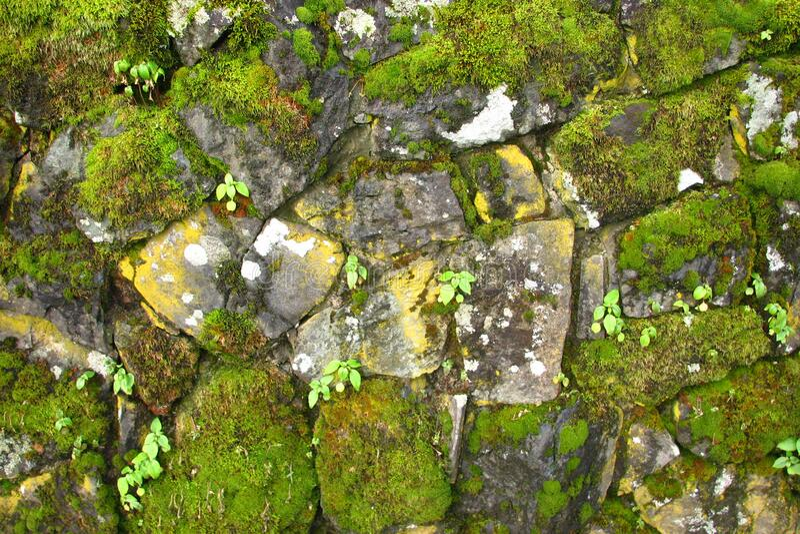 Stone Wall 7 Free Public Domain Cc0 Image