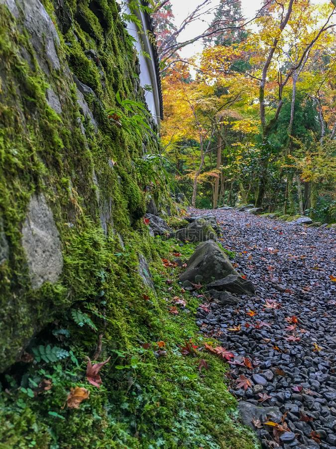 The stone wall covered with moss and fern with gravel ground on yellow maple trees background stock photos