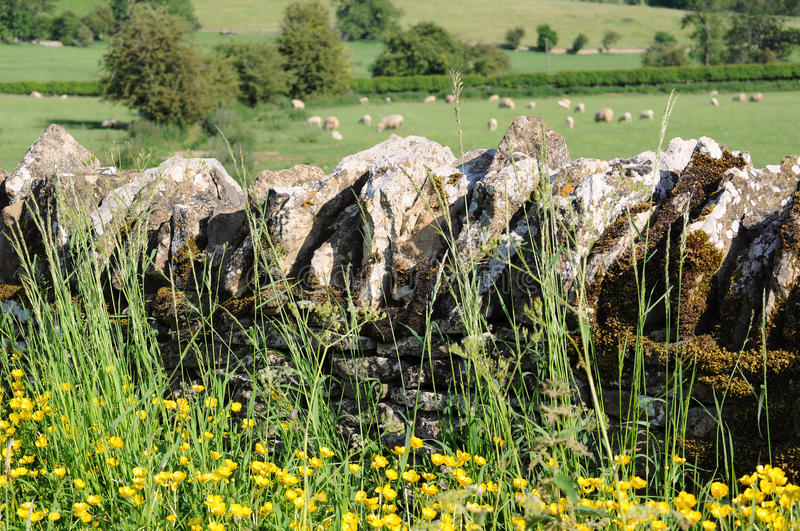 Stone wall in English countryside of Cotswolds stock photo