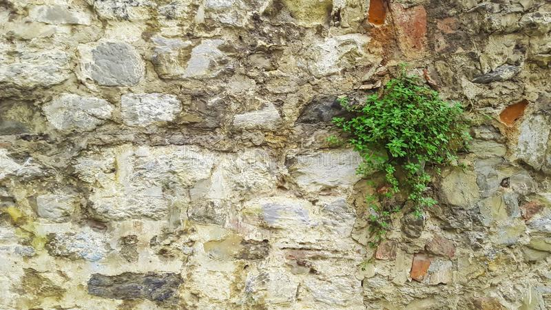 Stone wall with flower plant growing in foreground. Istanbul, Turkey - October 17, 2015 royalty free stock photography