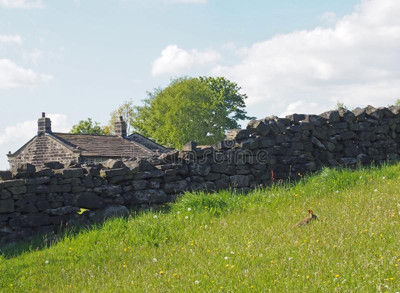 A stone wall in front of the roof of an old farmhouse with a small rabbit in a meadow of tall grass and string flowers stock photography