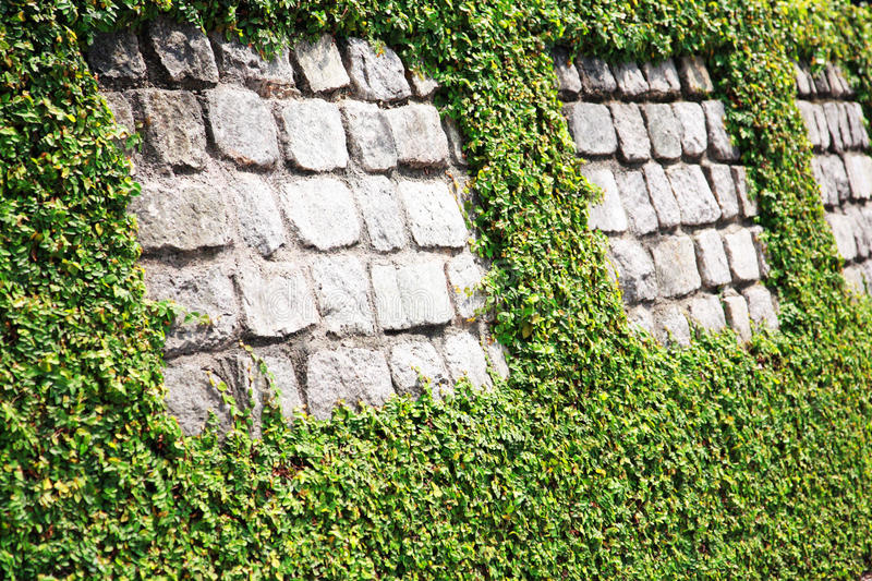 Download Stone wall with hedge stock photo. Image of life, around - 15274316