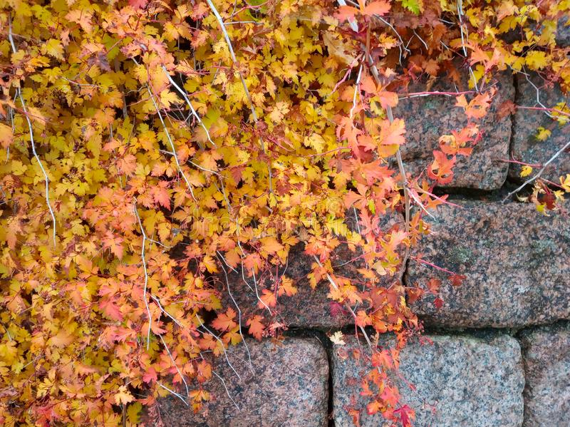 Stone wall with Leaves stock photos
