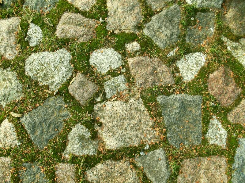 Stone wall with moss. stock image