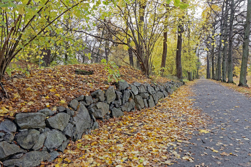 Stone wall in the park. Stone wall and hazel trees (lat. Corylus) in the park in autumn stock photo