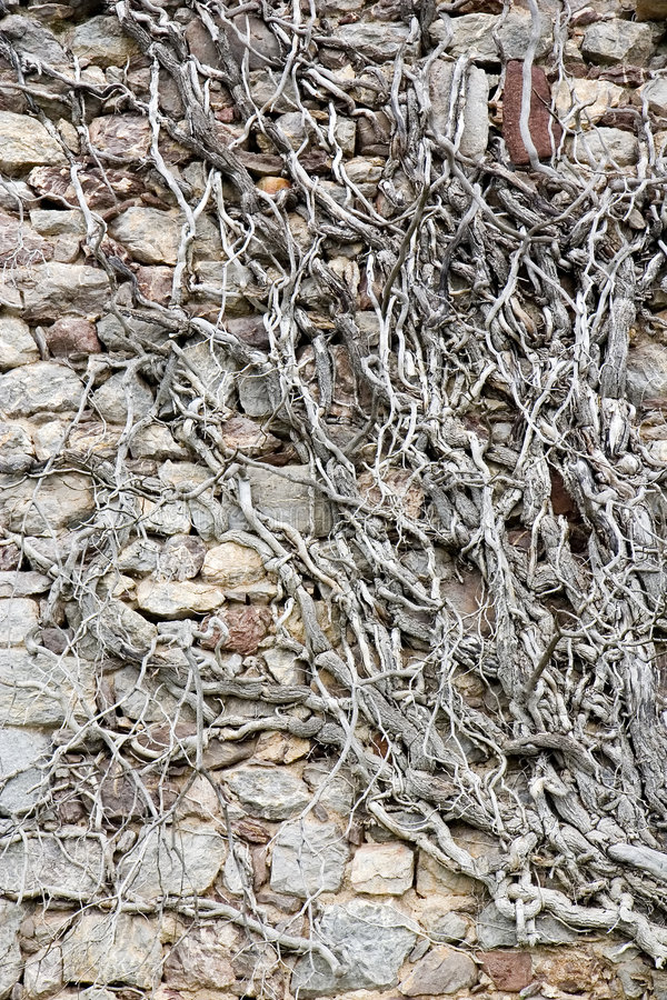 Stone wall and roots stock photography