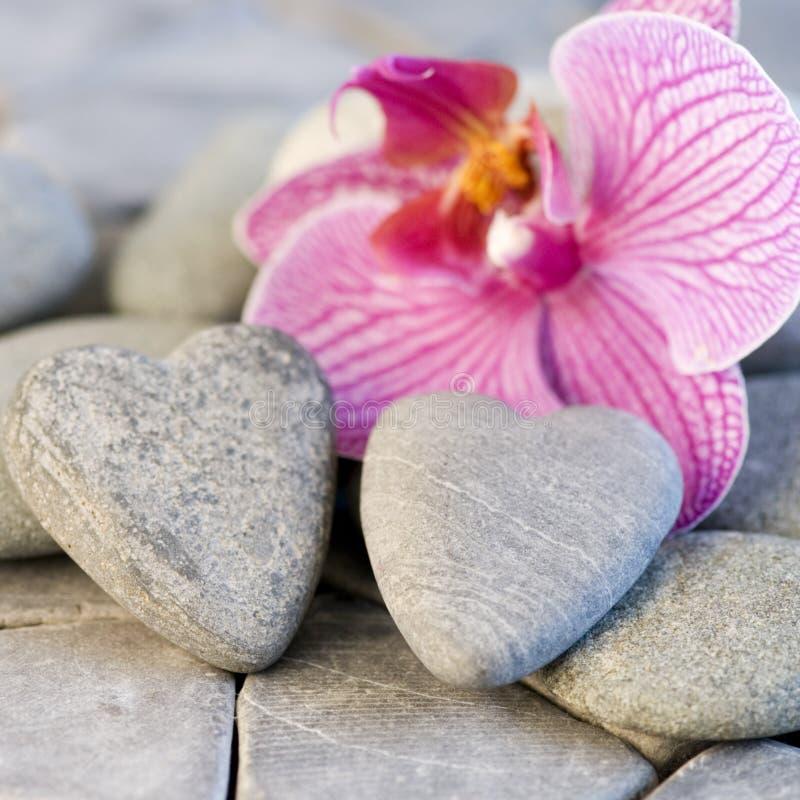 stoneheart орхидеи стоковые фото