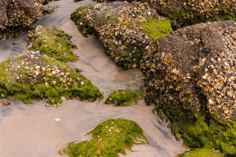 Stones on the the beach with moss stock photo