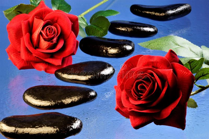 Stones SPA black beautiful sea and wet natural origin on a blue background lined in a row and bright red roses stock photos