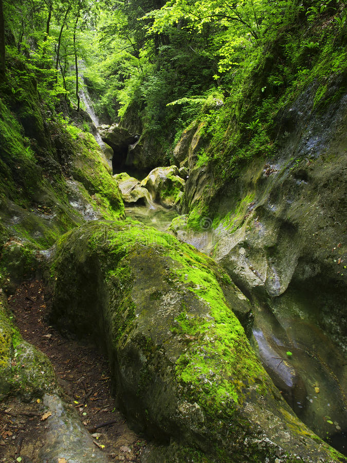 Download Stones In Forest Stock Photo - Image: 24881550