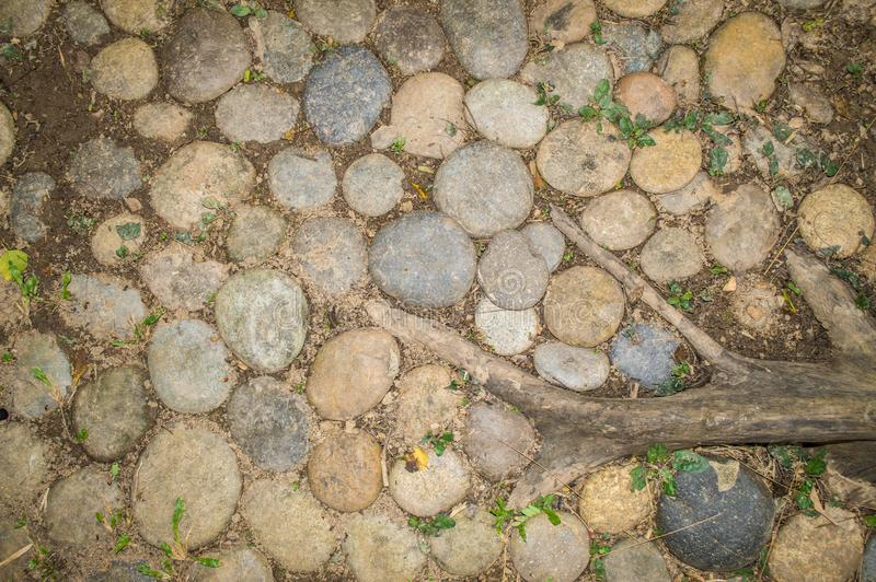 Stones, grass and plant root on ground, used as Background and Texture. royalty free stock photos