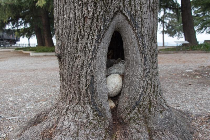 Stones inside a hollow in a tree royalty free stock image