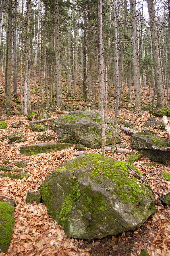 Stones and leaves in forest royalty free stock photo