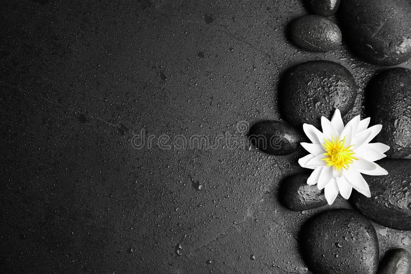 Stones, lotus flower and space for text on wet background, flat lay. Zen lifestyle. Stones, lotus flower and space for text on wet black background, flat lay stock photography