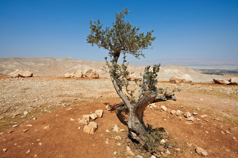 Download Stones and Olive stock image. Image of pile, hill, erosion - 20579811